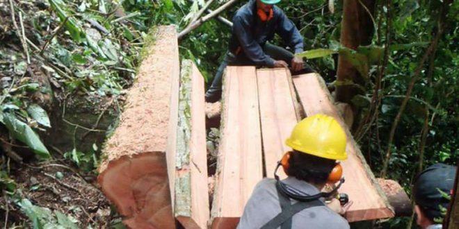 Honduras con alto potencial para comercialización legal de productos forestales