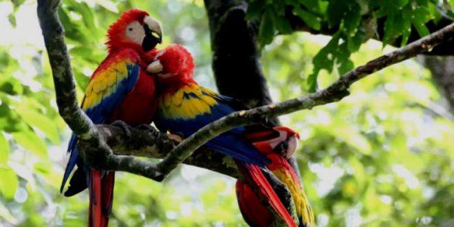Honduras participa festival de aves del Valle de Río Grande
